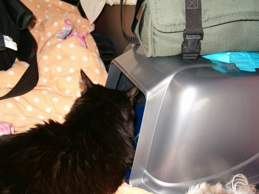 Oreo was so mad the first part of the trip she just stared into her litter box.